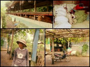 Pejeng Eco-Farm